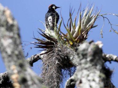 Honduras conmemora el 'Día del árbol' con una creciente destrucción de sus bosques