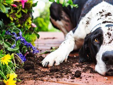 Los mejores consejos para evitar que tu perro o gato destruyan las plantas de la casa