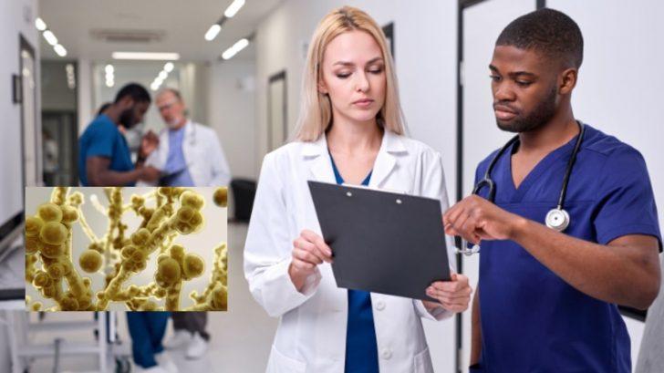 'Súper hongo': Dos casos de Candida auris se reportan en Estados Unidos ¿Será otra pandemia?
