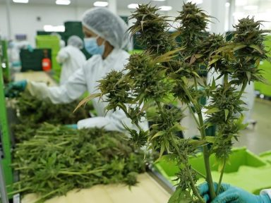 Colombia autoriza la exportación de la flor seca de cannabis