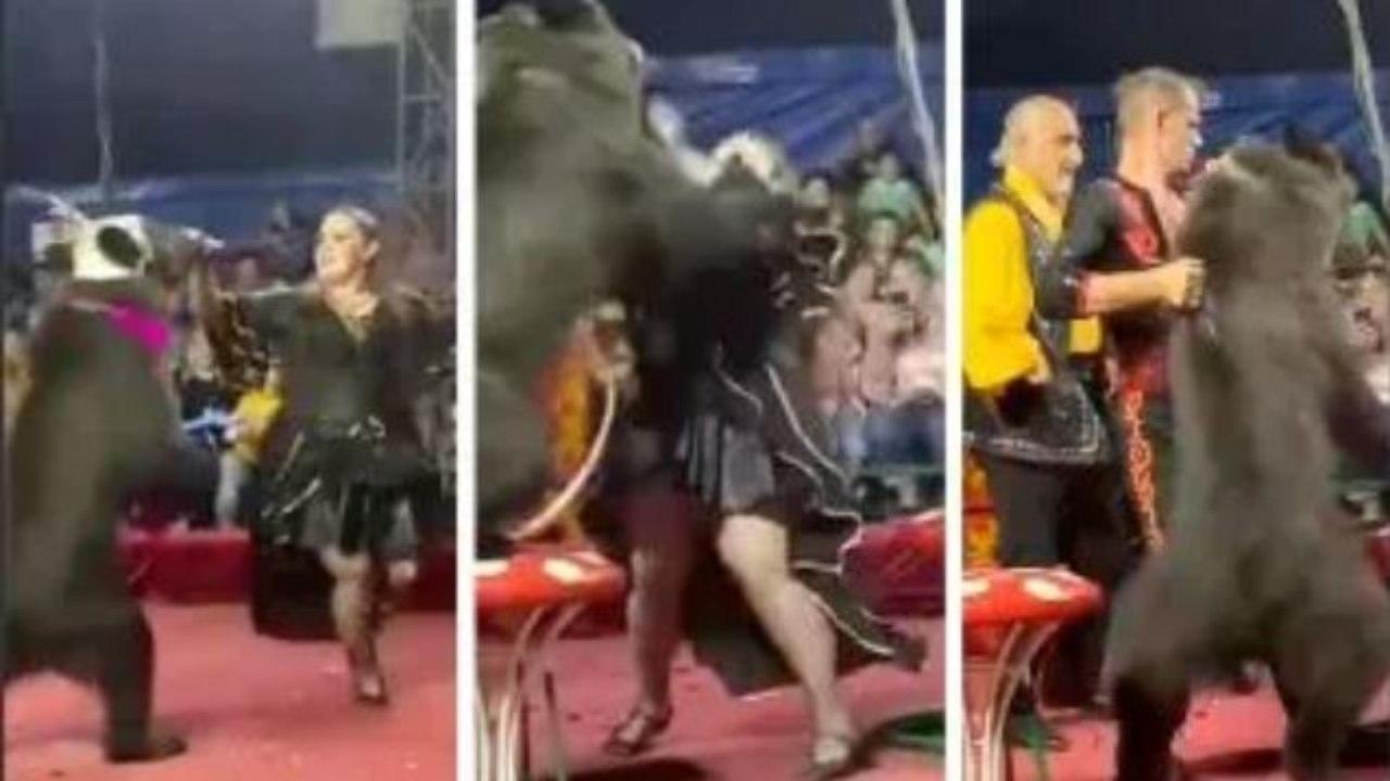 La mujer estaba en pleno show en un circo de Rusia cuando fue atacada por el animal y dos hombres tuvieron que intervenir para evitar un ataque más grave