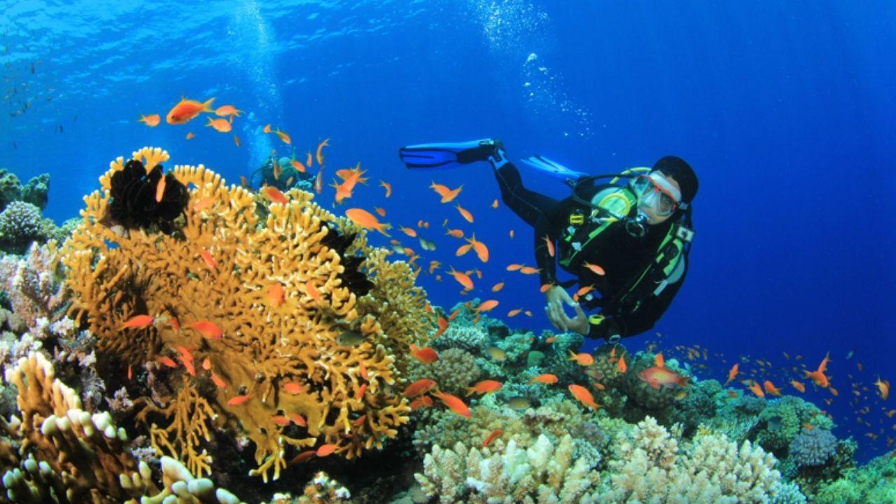 El arrecife coralino es una atracción turística que tiene Honduras y su belleza en fauna es muy rica, por lo que la conservación depende de todos