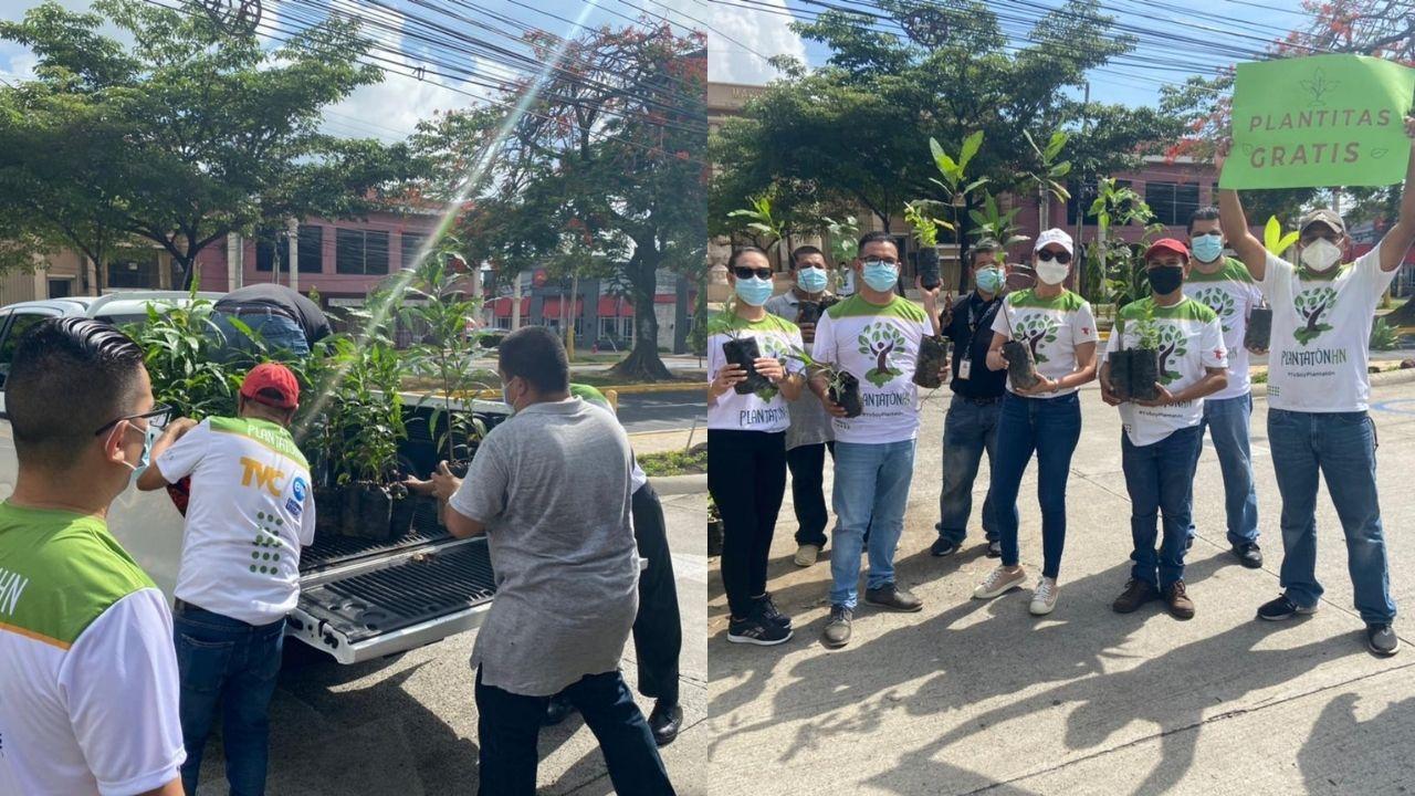Hondureños llegaron a las instalaciones de Televicentro por su árbol y así contribuir con el ambiente