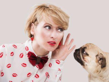 ¿Cómo entender mejor a tus mascotas?
