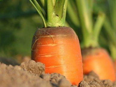 Estados Unidos propone a Latinoamérica una estrategia agrícola alternativa de la UE