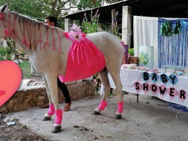 Familia mexicana se viralizó luego de hacer baby shower a yegua, a quien consideran 'una hija'