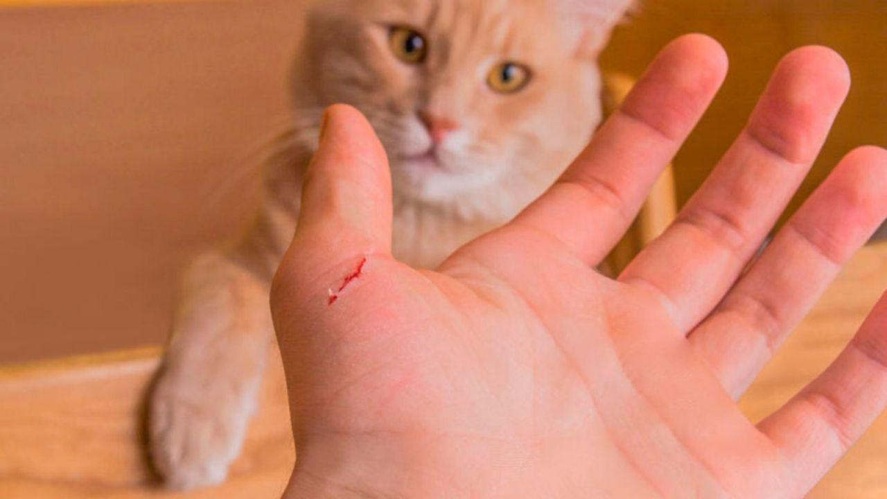 Estas son las enfermedades que puede provocar el arañazo de un gato