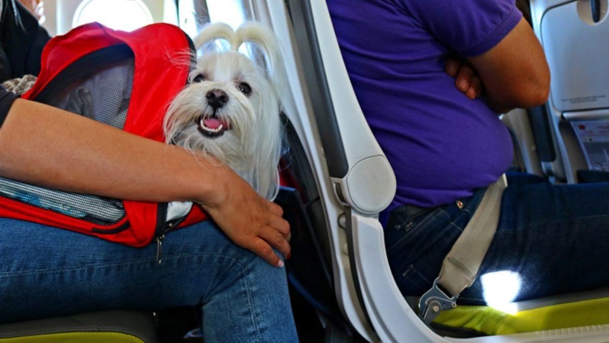 Viajar con perros a Estados Unidos