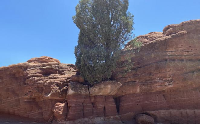 A Tree in the Rock