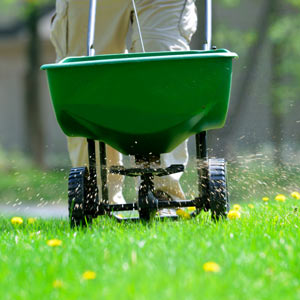 Lawn Maintenance Service - Full Day