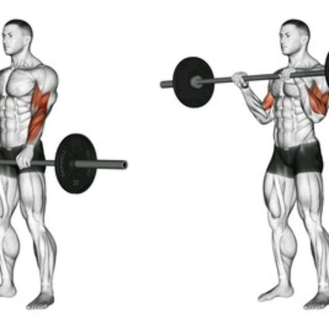 How to do: SZ-Barbell Reverse Curl - Step 1