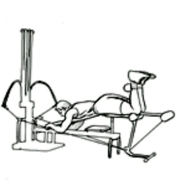 How to do: Bowflex Seat Leg Curl - Step 2
