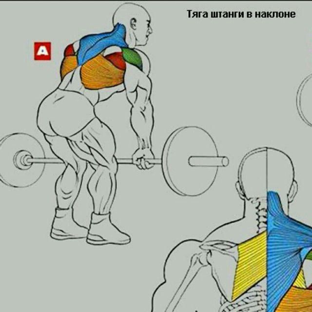 How to do: Тяга Штанги В Наклоне - Step 1