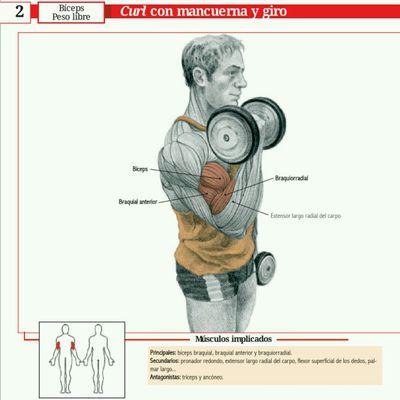 Bíceps 2