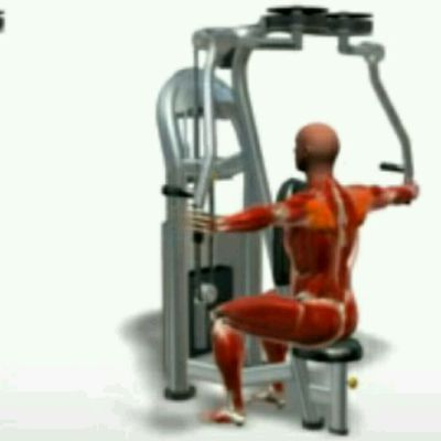 Rear Delts Machine