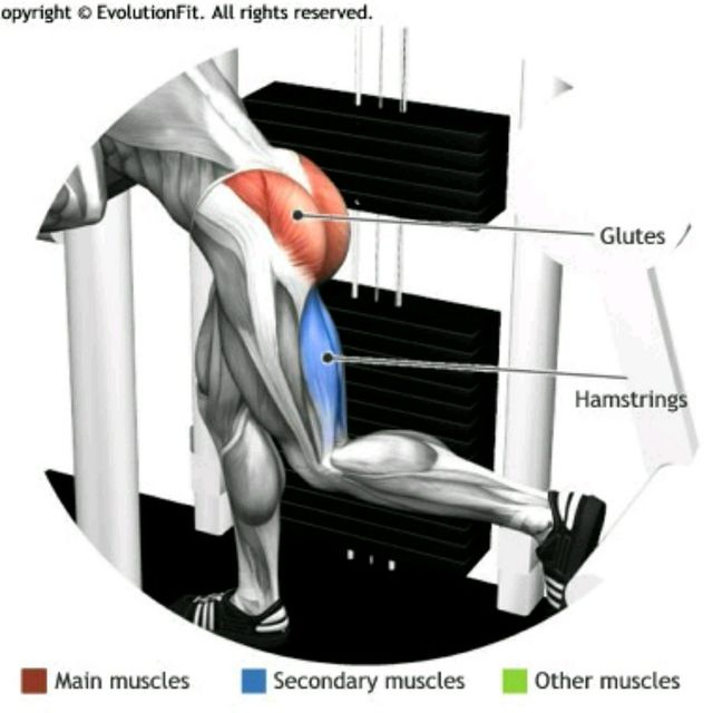 Glute Machine - Exercise How-to - Workout Trainer by Skimble