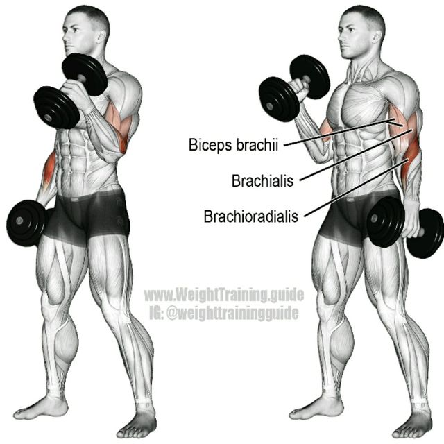 How to do: Alternating DB Hammer Curls - Step 1