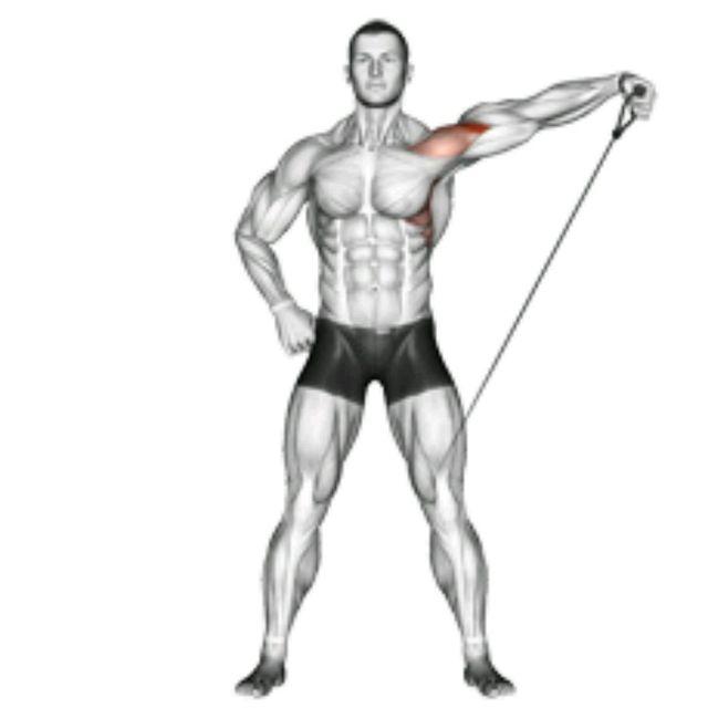 Shoulders/Triceps-V2