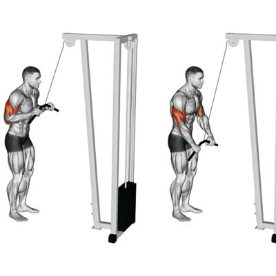 Triceps Pulley