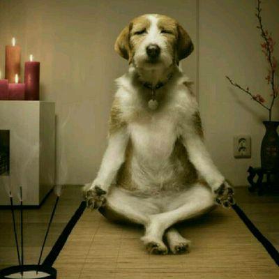 Zen Hotdog (One with Everything)