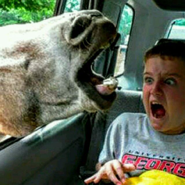 Death By Donkey