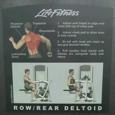Row/Rear Deltoid