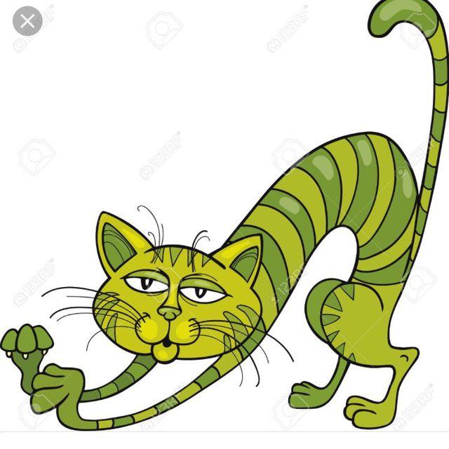 Cat Stretches