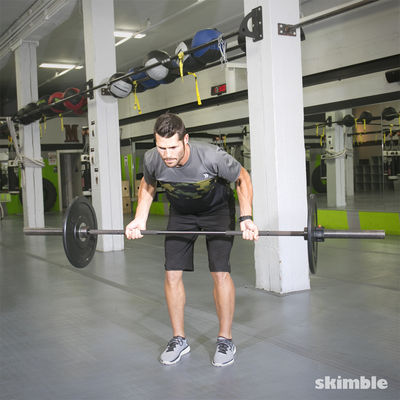 Barbell/Dumbbell Reverse Grip Row