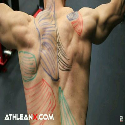 Upper Back Workout