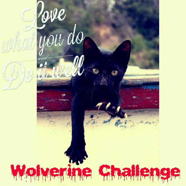 Would you be my Valentine?  February Wolverine Challenge 