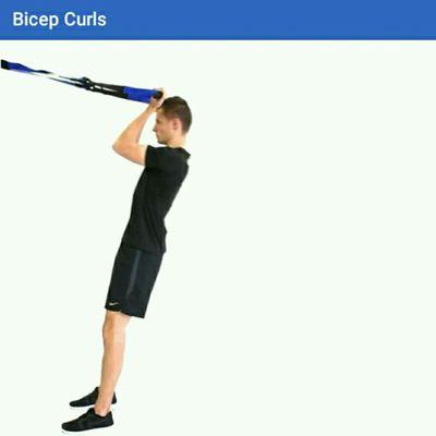 Bicep Curls (TRX)