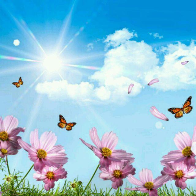 🌸☀️Good Morning, Sunshine!🌸☀️🌟HS