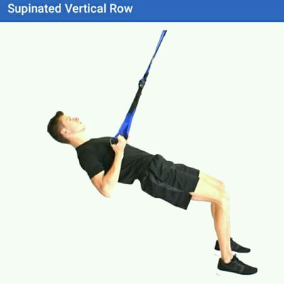 Supinated Vertical Row TRX