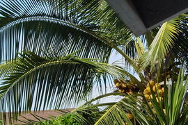 Moiliili, Hawaii, United States