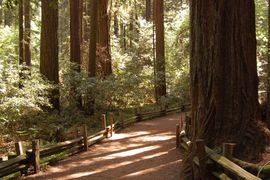 Henry Cowell Redwoods State Park, California, United States