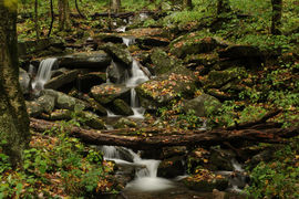 Great Smoky Mountains National Park, Tennessee, United States