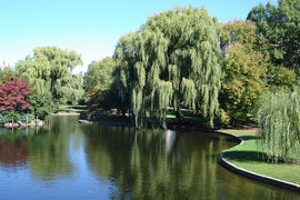 Boston Common And Public Garden, Massachusetts, United States