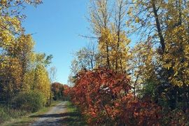 Lakefield Rotary Trail, Lakefield, Ontario, Canada