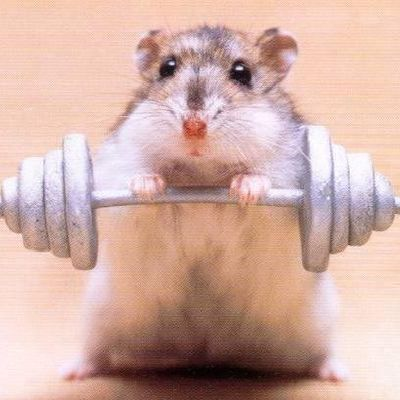 Funny-hamster-exercise-picture_full