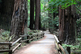 Muir Woods National Monument, California, United States