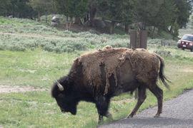 Yellowstone National Park, Idaho, United States