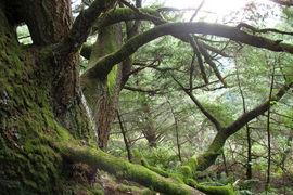 Purisima Creek Redwoods, California, United States