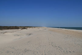 Assateague Island National Seashore, Maryland, United States