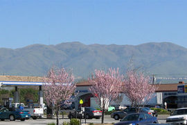 Milpitas, California, United States