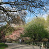 Riverside_park_nyc_thumb