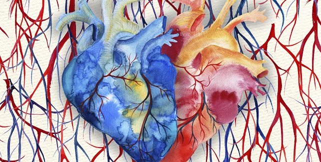 Case by Case, a Portrait Emerges of COVID-19's Cardiovascular Fingerprint
