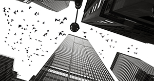 pigeons and skyscrapers