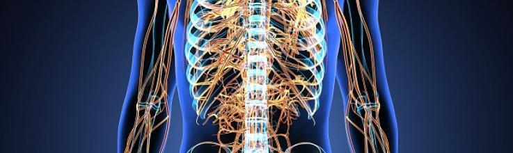 Splanchnic Nerve Ablation Improves HFpEF Symptoms, QoL in FIH Study