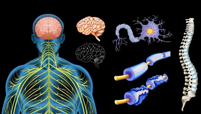 Dreams Dashed: Intravascular Therapy for MS Flops in Sham-Controlled Trial