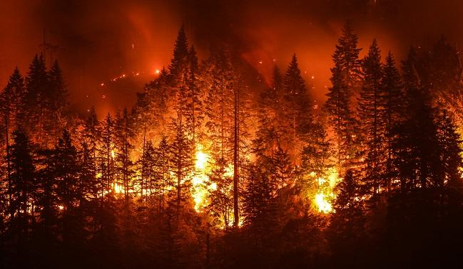 Particulate Matter From California Wildfires Linked to Cardiovascular and Cerebrovascular Events